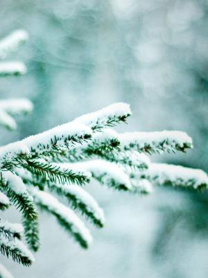 自然冬天树手机壁纸