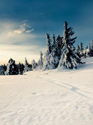 自然冬天雪移动壁纸