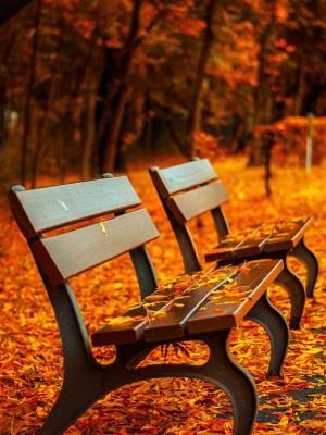 秋天来了移动壁纸