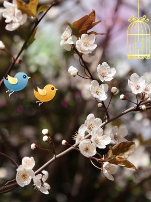 欢迎春天手机壁纸