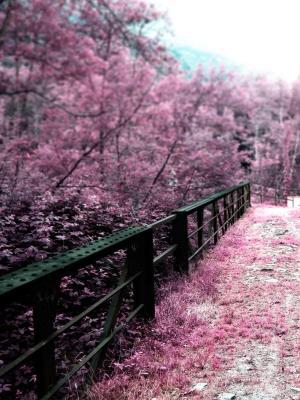 日本桥梁樱花移动壁纸