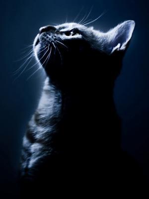 黑暗的流动墙纸的小猫