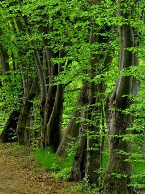 森林路径夏季移动壁纸