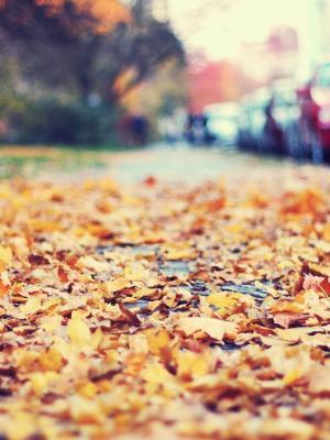 秋天的街道手机壁纸