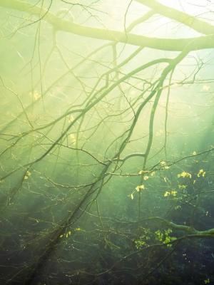森林太阳手机壁纸