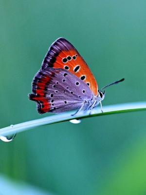 下载蝴蝶手机壁纸