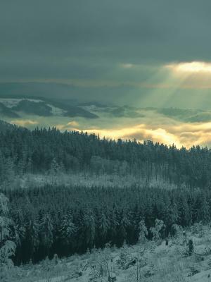 太阳Clearcut森林手机壁纸