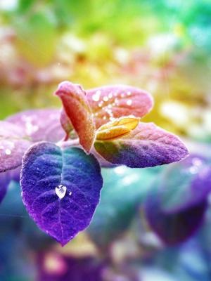 自然花朵手机壁纸