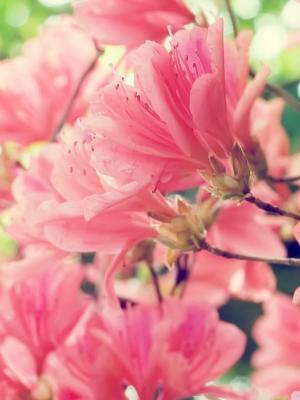 美丽的春天开花移动壁纸