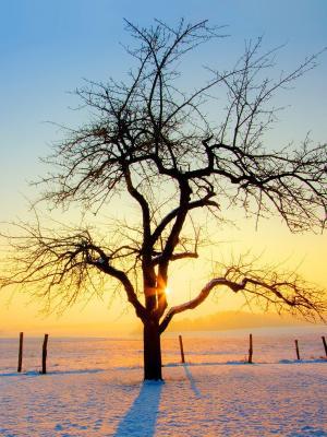 自然冬季移动壁纸