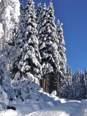 雪在分支在森林移动墙纸