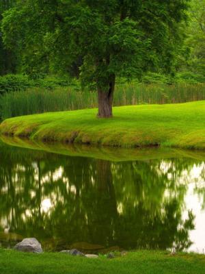 绿色草坪自然移动壁纸