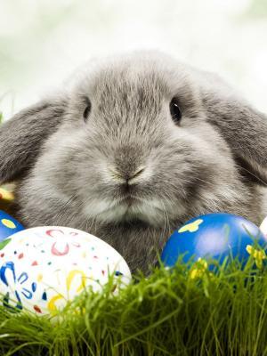 兔子草移动壁纸