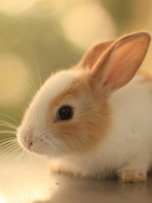 兔宝宝宠物手机壁纸