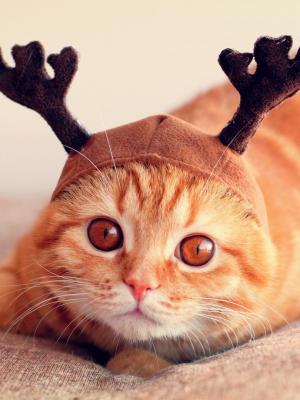 圣诞猫手机壁纸