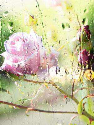 玻璃玫瑰移动壁纸