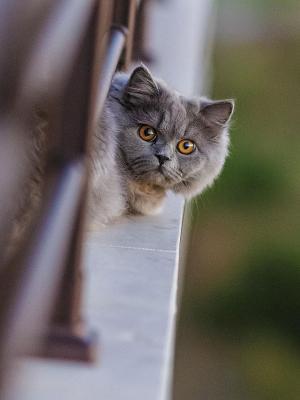 猫围栏看移动壁纸