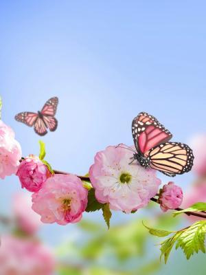 蝴蝶花手机壁纸