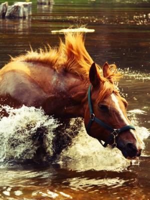 马喷水移动壁纸
