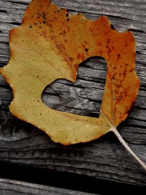 心叶秋移动壁纸