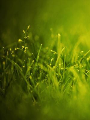 绿色触摸手机壁纸