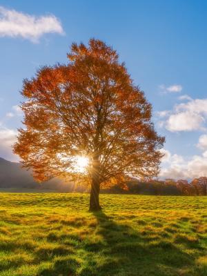 阳光透过树手机壁纸