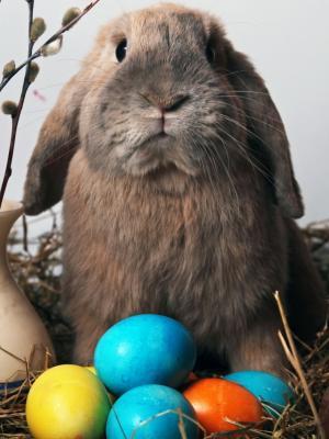 复活节兔子手机壁纸