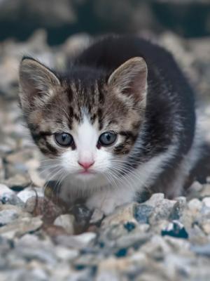 小猫手机壁纸