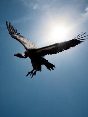 鸟在天空太阳移动壁纸