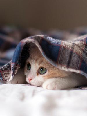 Sleep Kitty手机壁纸