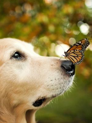 狗蝴蝶手机壁纸
