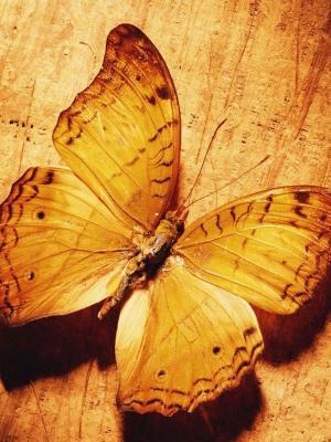 在木移动墙纸的美丽的蝴蝶