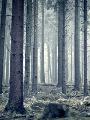 树手机壁纸