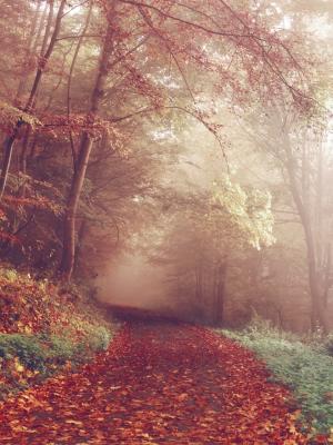 秋天风景移动壁纸