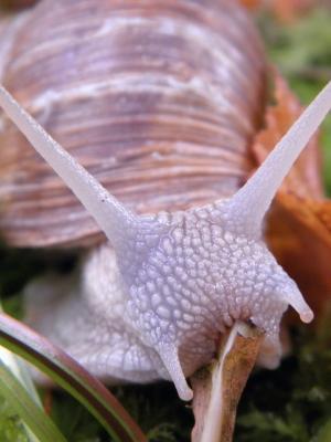 爱蜗牛手机壁纸