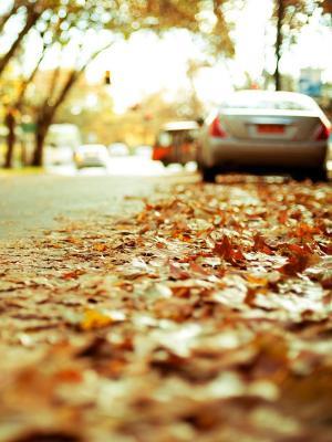 堕落的树叶路移动壁纸