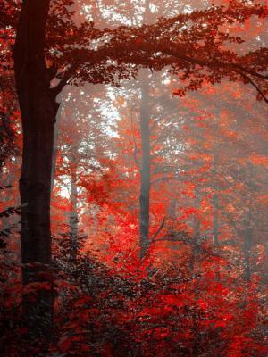 红色森林移动壁纸