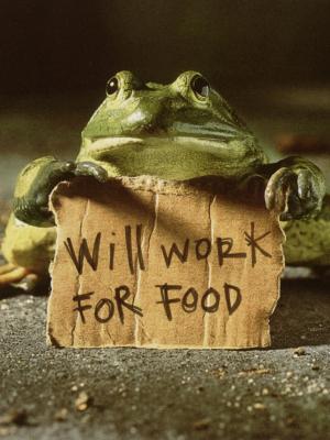 食物青蛙有趣的工作移动壁纸