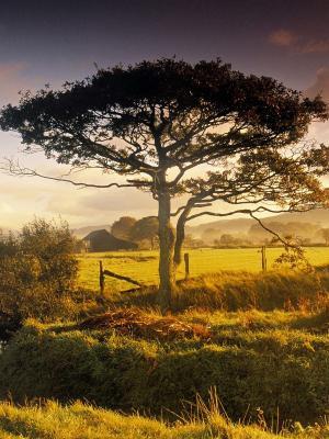 树日落移动壁纸