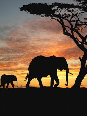 大象Cub动态壁纸