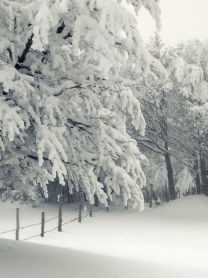 圣诞节明亮的冻结的移动墙纸