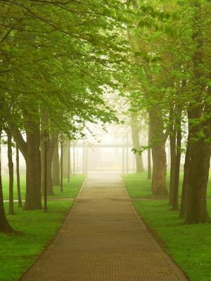绿色路移动壁纸