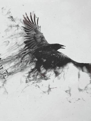 鸟黑色和白色黑暗的手机壁纸