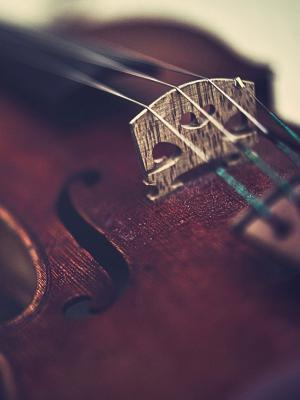 宏小提琴手机壁纸