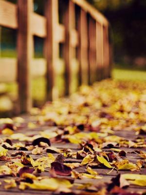 秋天的手机壁纸