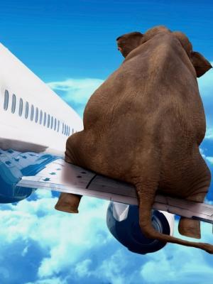 slon samolet krylo polet nebo手机壁纸