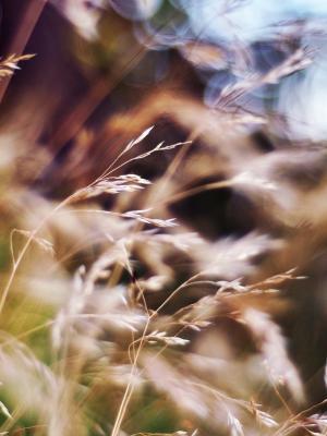 自然森林手机壁纸