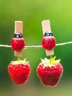 草莓浆果手机壁纸