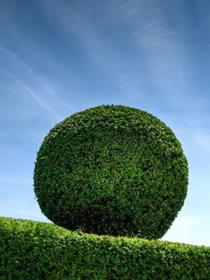 自然蓝色公园绿色手机壁纸
