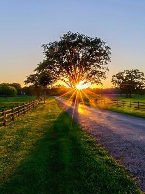 太阳正在设置移动壁纸